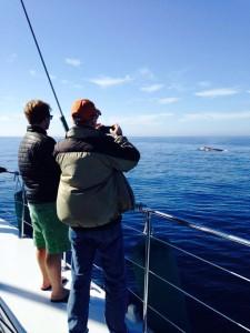 Aolani Catamaran Whale Watching
